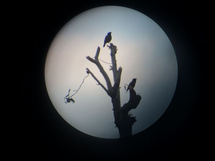 Got this with the help of cell and mini telescope ;) Birds_n_branches