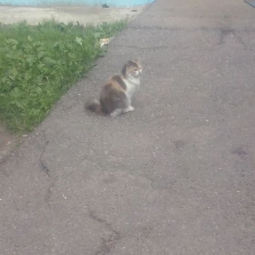 Catgoesmeow Catlover Catsagram Catsofinstagram кошки кошарик кошастик кошки