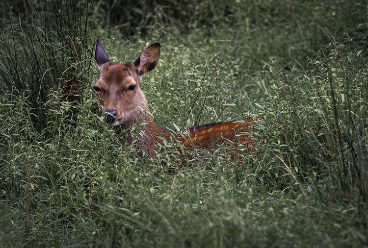 Portrait of deer in a field