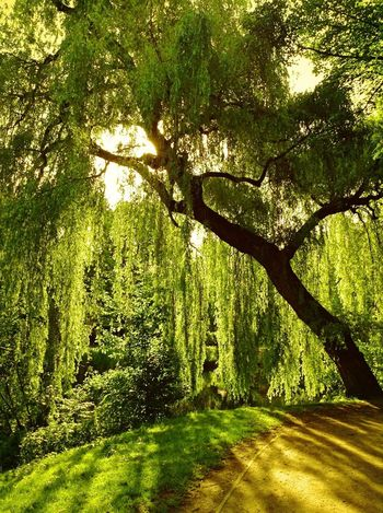 Trees Enjoying The Sun TreePorn