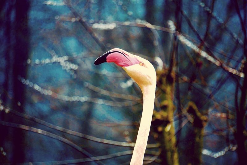 One Animal Animal Themes Animal Wildlife Animals In The Wild Animal Vertebrate Bird