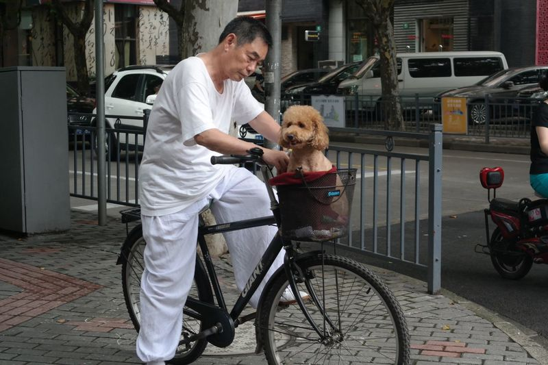 Dog Bicycle One Animal Mature Adult Pets Transportation Mature Men Happiness Smiling One Person Bicycle Dog In A Basket Rethink Things Mobility In Mega Cities