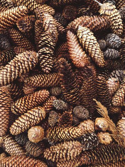 Full frame shot of pine cone