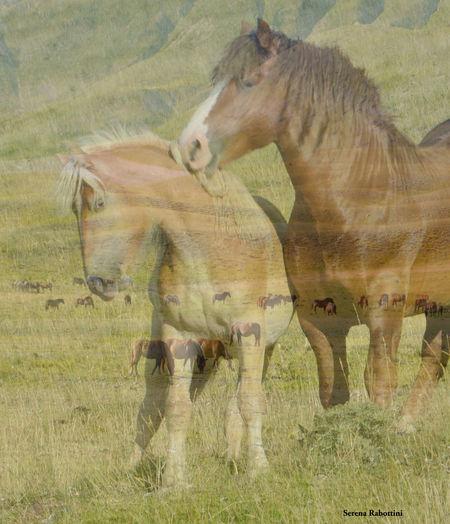 Nature Field Animal Photography Mountain Italy Horse Love Freedom EyeEm Best Shots Eyeemphotography EyeEm Gallery
