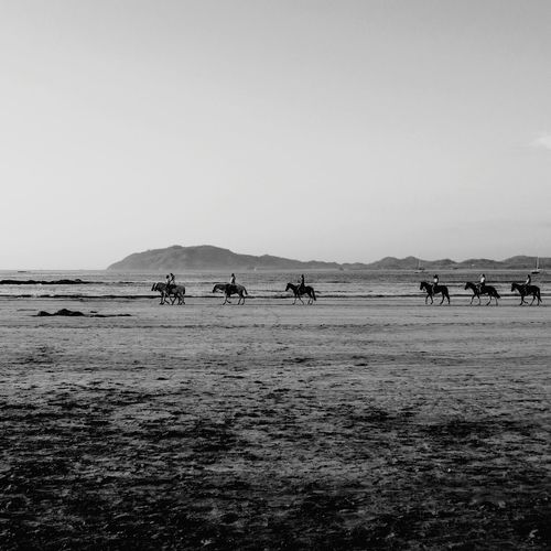 Paseo Blackandwhite Blancoynegro Bnw Horses Horseback Riding Guanacaste  Costa Rica Water Sea Beach Sand Sky Horizon Over Water