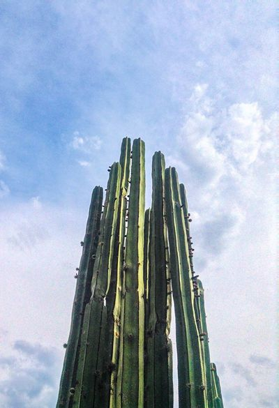 The Great Outdoors - 2017 EyeEm Awards Low Angle View Sky Cloud - Sky Day No People Outdoors Nature Growth Saguaro Cactus Beauty In Nature