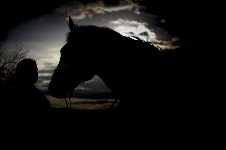 Silhouette of horse against sky at sunset