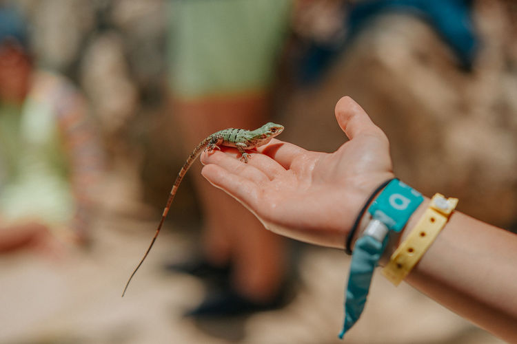 Cropped hand of woman holding lizard outdoors
