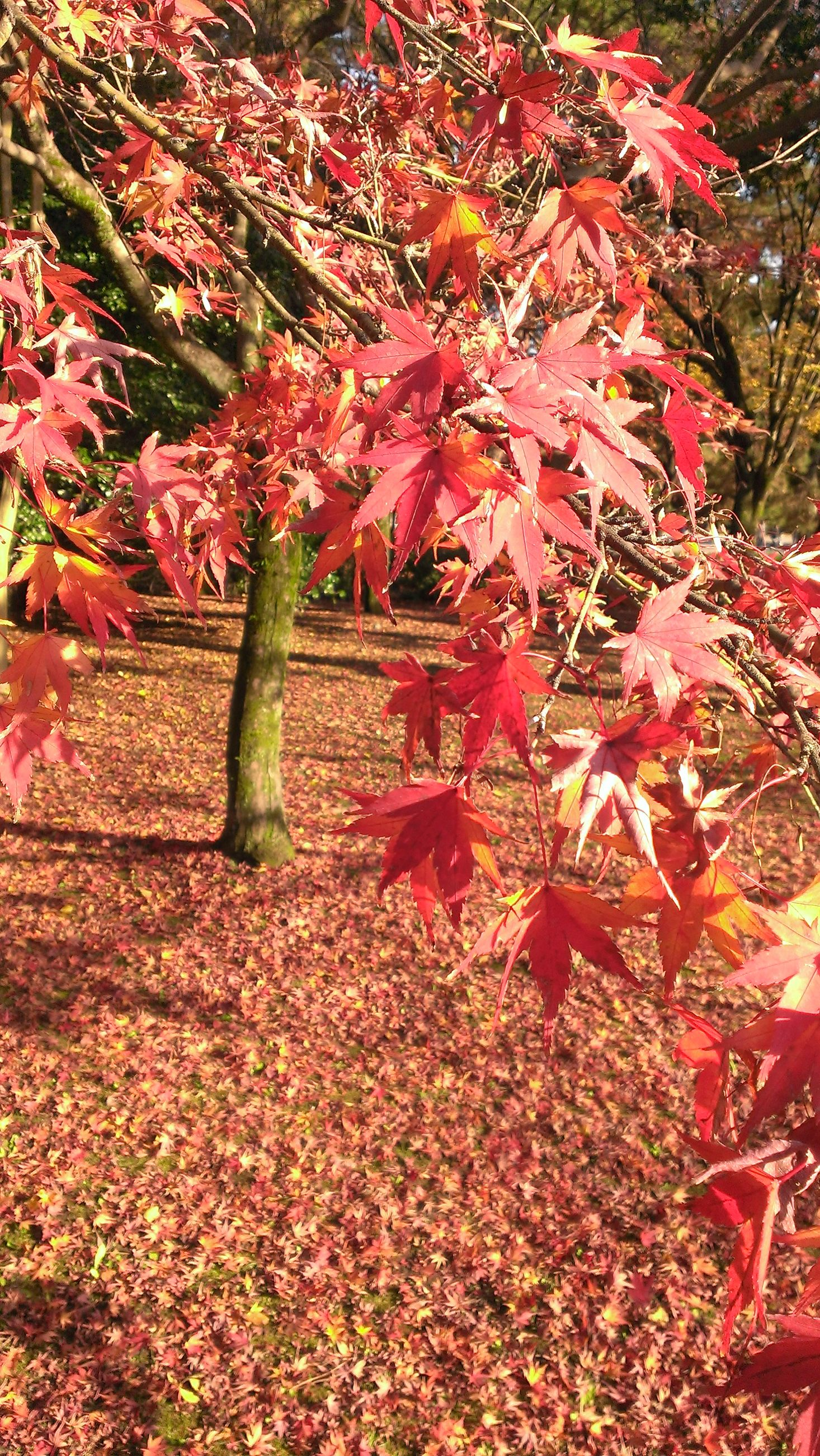 flower, growth, leaf, autumn, red, change, season, nature, plant, beauty in nature, freshness, high angle view, day, tree, outdoors, fragility, park - man made space, abundance, no people, pink color