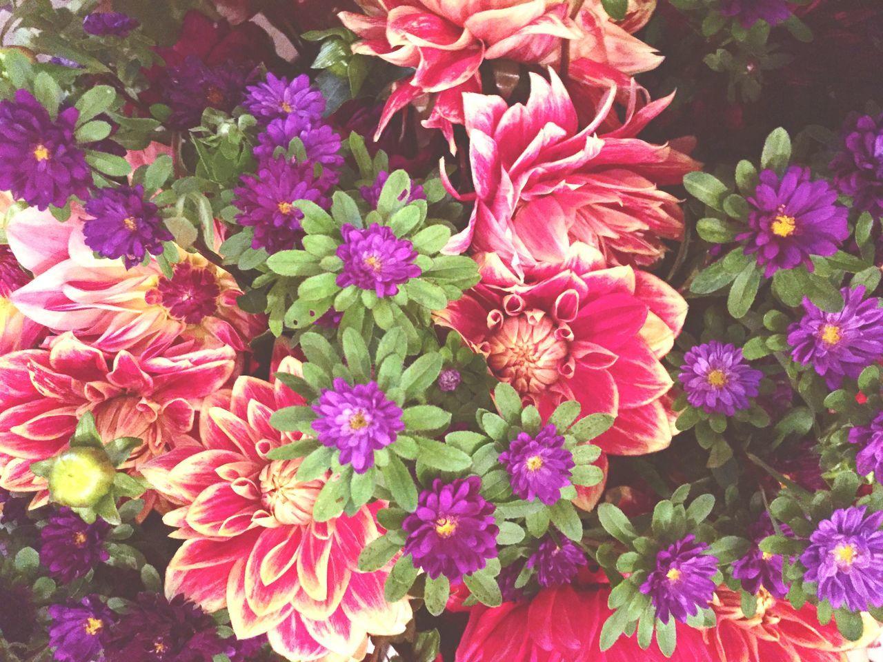 Full Frame Shot Of Flowers Growing On Plant