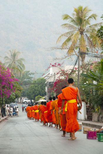 Ritual of Monks Collecting Alms ALMS City Collecting Alms Laos Large Group Of People Luang Prabang Monks Palm Tree