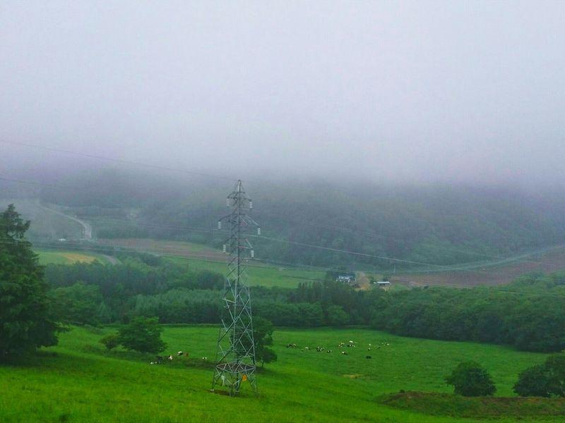 小さく…牛🐮…☔ The Week Of Eyeem Japan Rural Scene Black_chica1707 Hokkaido,Japan Hokkaido EyeEm Selects EyeEmNewHere 田舎暮らし Landscape_photography EyeEm Best Shots Rural Landscape Cloud - Sky Beauty In Nature Landscape Mountain 自然 Green Color Mountain Range Forest