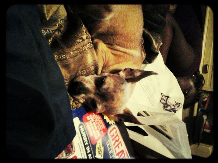 My Puppy I Love Her
