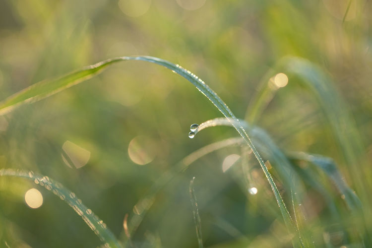 Morning dew on grass Beauty In Nature Close-up Dew Dew Drops Drop Field Focus On Foreground Fragility Freshness Grass Grass Grass Blades Green Color Growth Morning Morning Dew Morning Light Nature No People Outdoors Plant RainDrop Water Wet