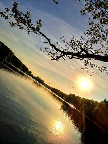 Tree Sunset Bird Sky Cloud - Sky