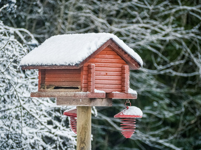 Red bird house and feeder in a snowy forest