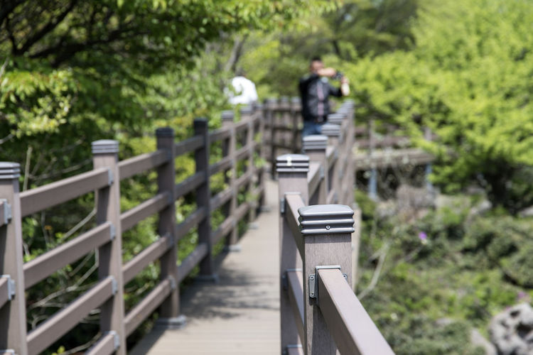 View at 1100m altitude of Hallasan Mountain in Jeju Island, South Korea 1100m Altitude Day Footbridge Full Length Hallasan Mountain JEJU ISLAND  Nature One Person Outdoors People Railing Real People Tree Walking