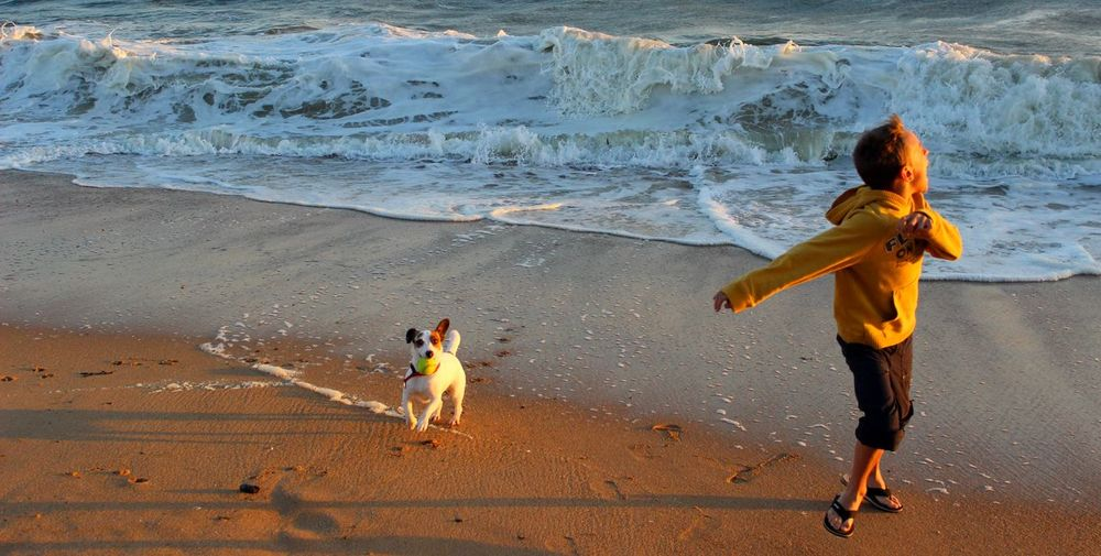 Beach Casual Clothing Childhood Coastline Enjoyment Full Length Jack Russel Terrier Jack Russell Pomeranian Mix Ocean Pets Playing Sand Sea Shore Summer Surf Togetherness Tranquility Vacations Water Wave
