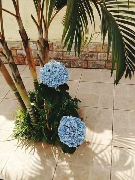 Beautiful hydrangea. Nature Hydrangeas Minimalism Flowers Urban Pretty