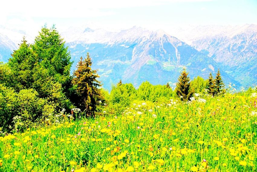 Alm Landscape_Collection Landscape_photography Landscape #Nature #photography Berge Mountains Urlaub Holiday Traveling Hello World Relaxing