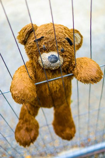 Teddy Bear Animal Themes Animal One Animal No People Mammal Animal Wildlife Day Focus On Foreground Close-up Brown Outdoors Vertebrate Pets Nature Domestic Flooring