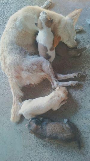 Dog Babydoggy Hello World