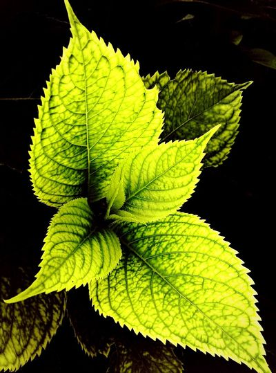 Plants Green Nature Upclose  Rough Edges Leaf Vibrant