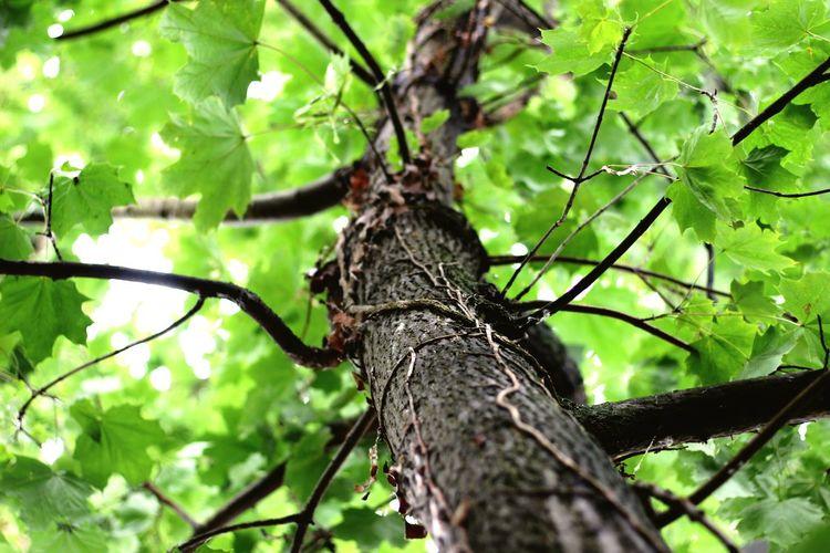 Deine Liebe hält mich und lässt mich nicht mehr los, wie ein gift ohne gegengift, bin ich ihr ausgeliefert. Tree Branch Perching Animal Themes Close-up
