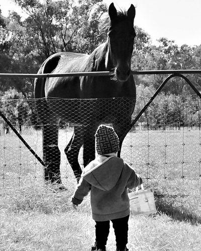 Feeding Harry first job Horse Field Farmanimals Animal Themes Childhood Australia The Great Outdoors - 2017 EyeEm Awards The Photojournalist - 2017 EyeEm Awards