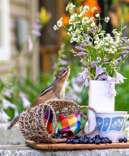 Close-up of small bird on flower pot