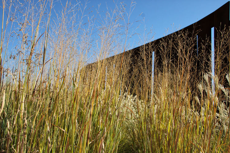 "Hangar Bicocca, Milano: a field with artwork ""la Sequenza"" by Fausto Melotti in the background. ArtWork Autumn Autumn colors Copy Space Field Grass Hangar Bicocca Milan Italy Nature Art Autumn Grass Blue Sky Blue Sky Background Daylight Dried Grass Fausto Melotti Fausto Melotti La Sequenza Golden Field Grass And Sky Hangarbicocca La Squenza Outdoors Sculpture The Sequence"