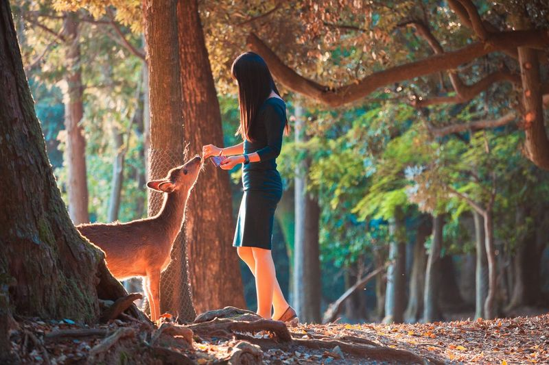 Woman feeding deer while standing in forest