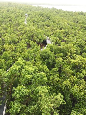 Green Color Tree Nature Lush Foliage Growth No People High Angle View Day Forest Beauty In Nature Plant Outdoors Scenics Tea Crop Sky Hiking Hikingadventures Trees Green Color Forest Photography View From Above