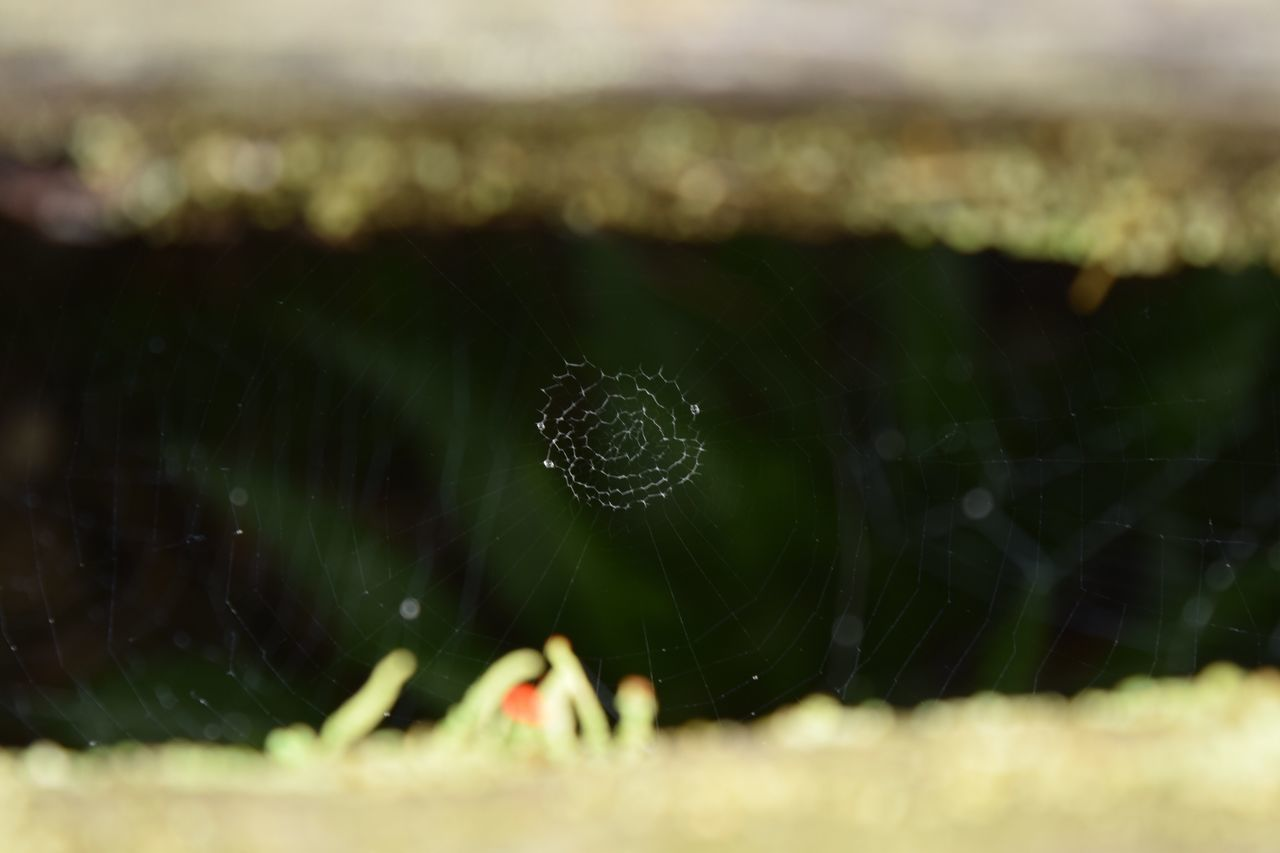 spider web, web, nature, spider, fragility, close-up, drop, beauty in nature, outdoors, selective focus, focus on foreground, one animal, day, water, no people, animal themes, freshness