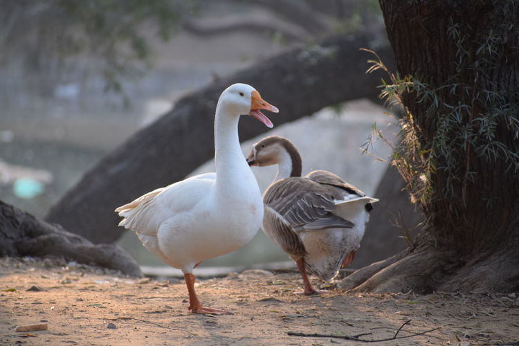 And then the talking began.. Animals In The Wild Bird Animal Themes Animal Wildlife Outdoors Water Swan Urbanphotography Abstract Photography Abstract Magicoflight Taking Photos Creative Photography Urban Architecture Wings Flight Capturing Freedom Life EyeEmNewHere