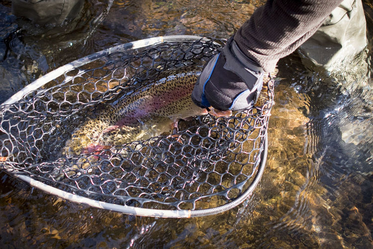 High angle view of person fishing in water