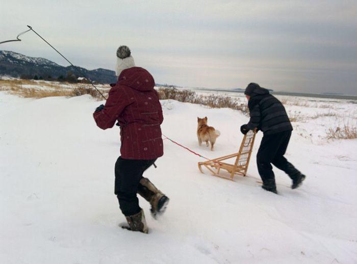 Sleighride Sleigh Dog Wintersports Motion Mypointofview Fun Warm Clothing Tobogganing Snow Bonding Cold Temperature Winter Togetherness Child Dog