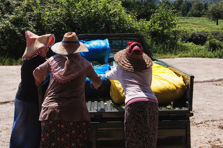 Women loading tea leaves in sacks on pick-up truck