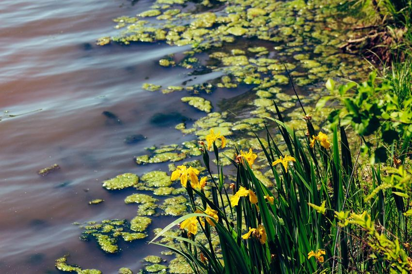 Yellow Plant Flower Nature Leaf No People Blooming Day Tranquility Water Flower Head Beauty In Nature 3D Canonphotography