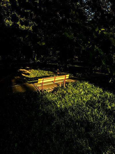 yellow bench in