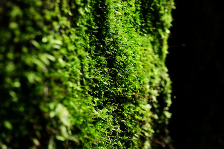 Nature Plant Textured Glass Background Texture Green Forest Leaf Light And Shadow Moss
