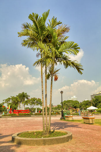 Palm trees in park against sky