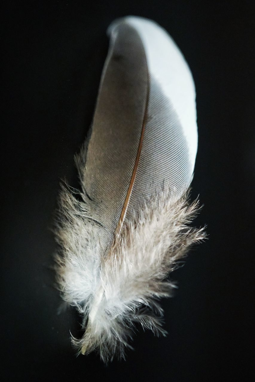 CLOSE-UP OF FEATHER ON TABLE