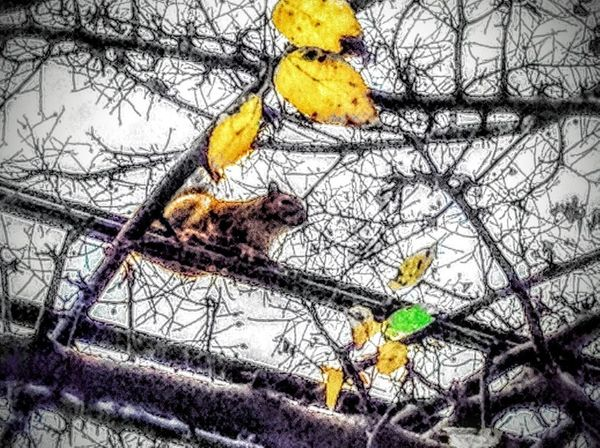 Animals Day Nature Outdoors Photography Squirrel Squirrels Trees