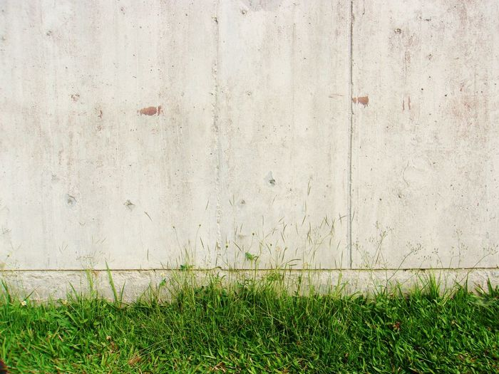 old concrete wall and green grass Green Retro Wall Architecture Backgrounds Building Exterior Built Structure Close-up Concrete Day Dirty Grass Green Color No People Old Old Buildings Outdoors Texures Texures Of Nature