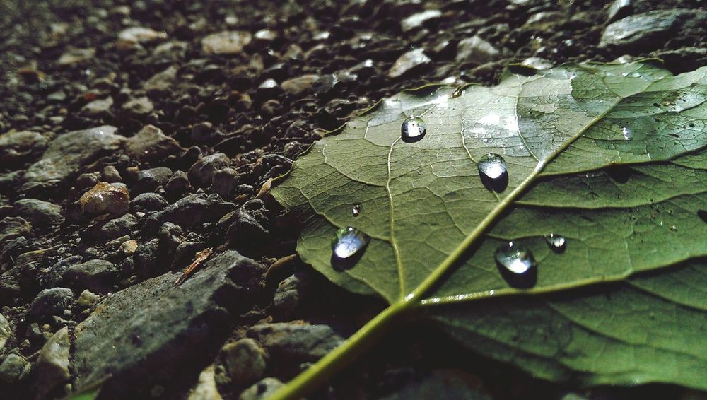 Nature HTC_photography Leaf 🍂 Morning Raindrops
