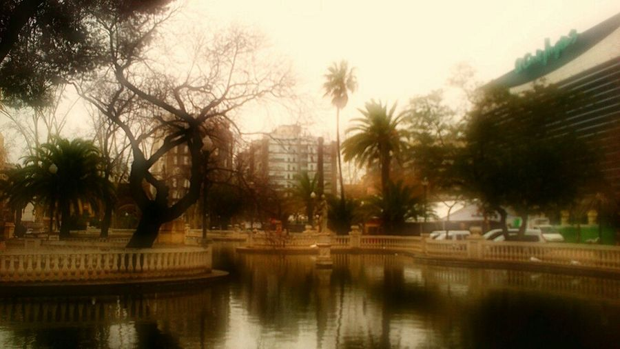 Nature Garden City Playing With Effects Picoftheday Castelló De La Plana Palmtree Natura Water_collection Magdalena Parc De Ribalta