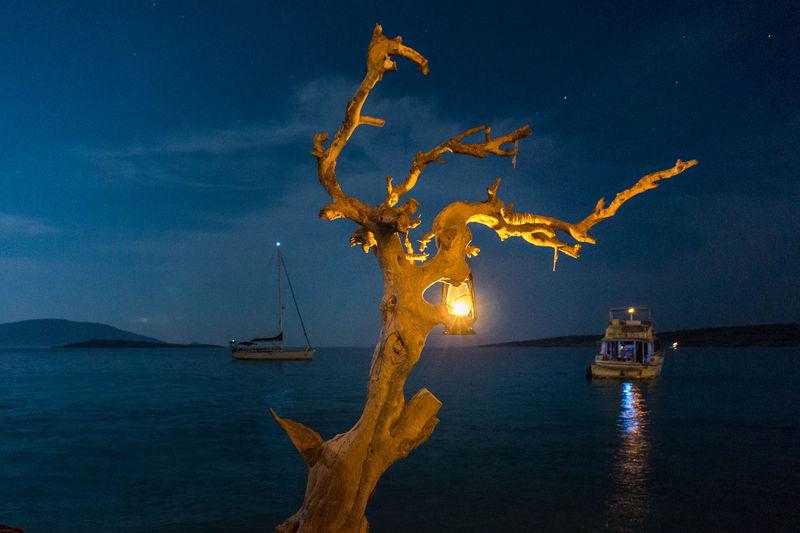 Illuminated Lantern On Dead Tree Against Sky At Night