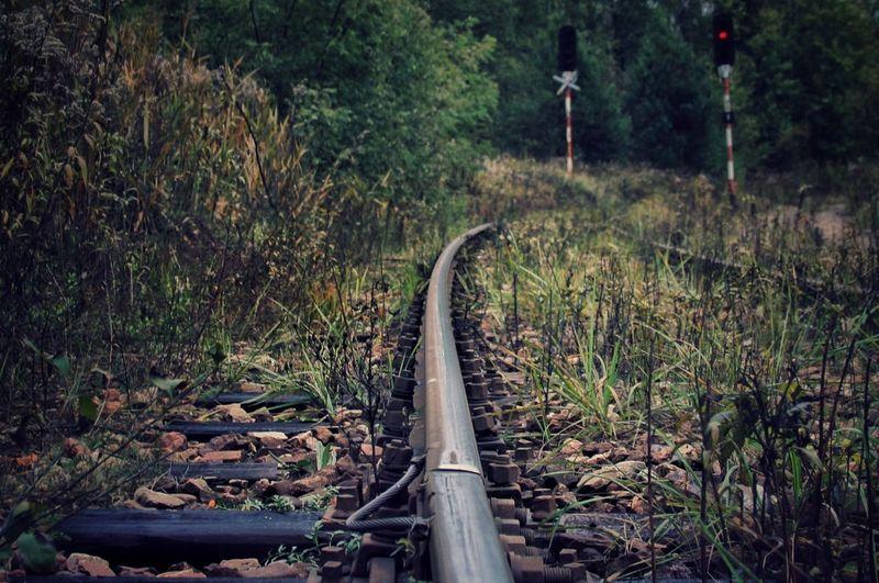 Railroad track amidst plants