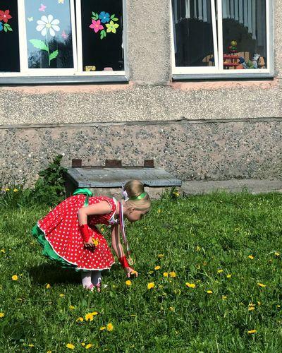 Полянка Kindergarden Детский сад девочка одуванчики Срывать цветок Plant Day Nature Red Grass Architecture Outdoors Green Color Sunlight Window Built Structure